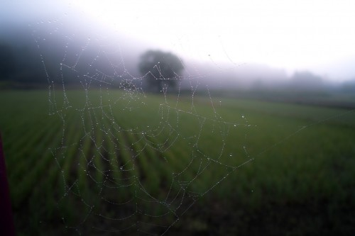 spider-web-768538_1280 4 reasons to simplify your social media: Photo of spider web in the prairie