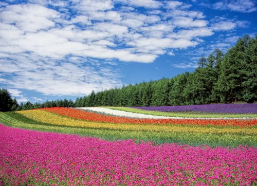 Tending the garden of my soul: Photo of colorful fields of flowers.