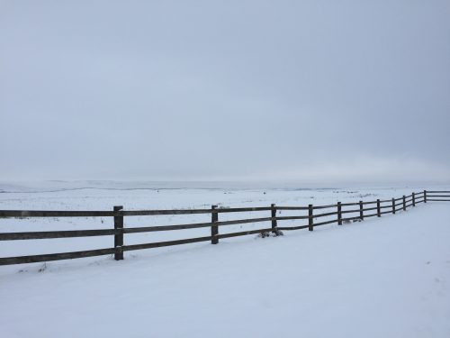 New things for the new year at Hip Diggs: Photo of fence in the snoww