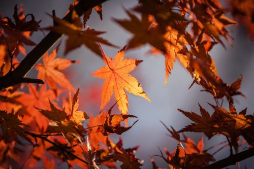 Happy Thanksgiving from Hip Diggs: Photo of autumn leaves.