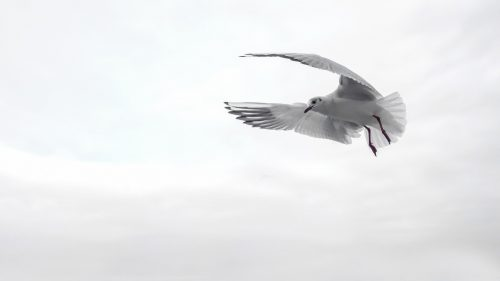 Free course on simple living: Photo of white bird in white sky.