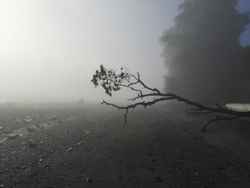Minimalist interior design: Photo of tree branch on a foggy morning at the beach.