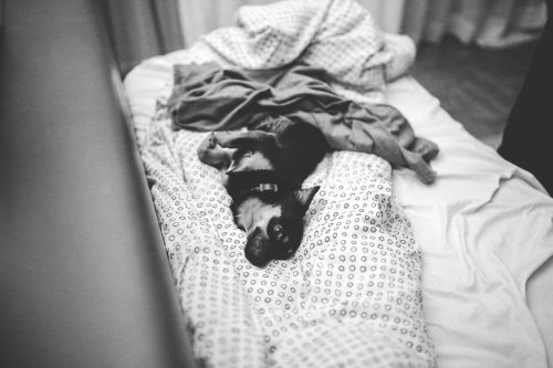 The subtle art of knowing when not to give a f@#&: Photo of dog lying on unmade bed.
