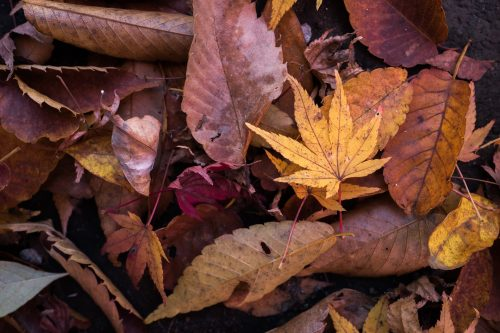 Slow changes: Photo of autumn leaves.